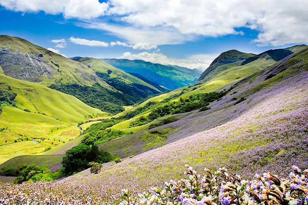 Munnar tour packages